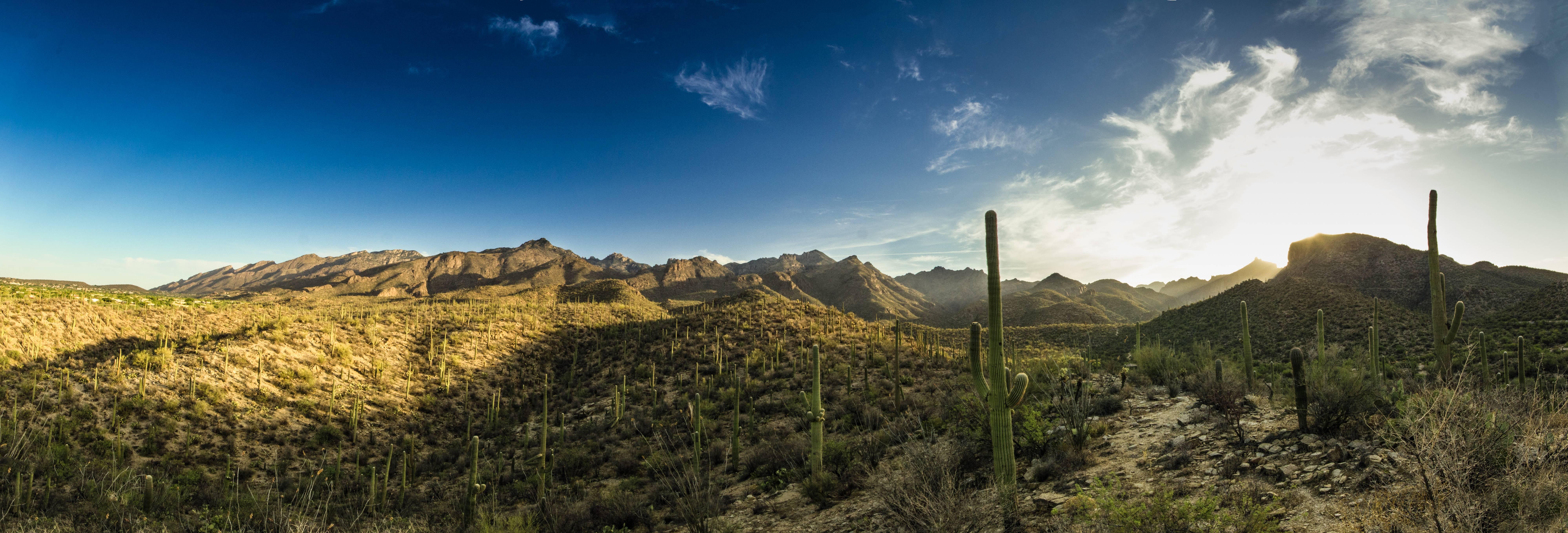 Arizona sabino canyon